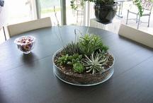 Succulents centerpieces ideas
