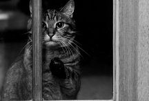 Petty Cats