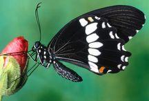 I ❤ Butterflies