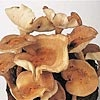 Mushrooms! / by Eve Newsome