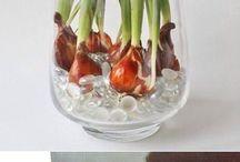 tulipan dorado