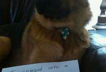 Dog shaming!