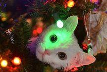 Stuff / Les magies de l'Internet : weird things, sometimes of very bad taste but always cute !