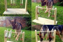 Dog diy