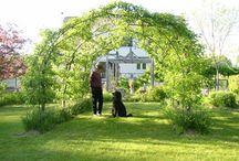 Garden Ideas / by Courtney Clay