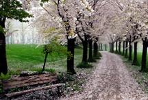 Spring....I LOVE