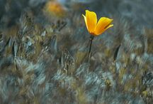 Flowers. DM. Foto / FLOWERS #lensbaby #rubinar #pentacon