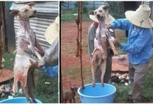 Please !!!! Be the voice of the animals!!