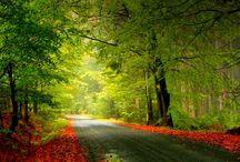 Naturaleza / Bosques con encanto