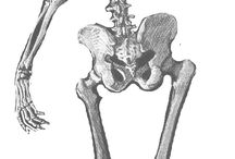 skeleton inspiration