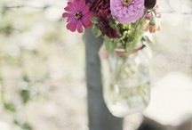 Wedding Ideas/JimmynMirandaFisher / by Lori Ice