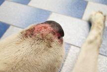 Choroby psów / Chory pies - zdjęcia, najnowsze wiadomości.