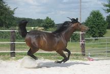My Horses / badiha, shadowfax, bonanza