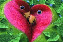 *Lovebirds*