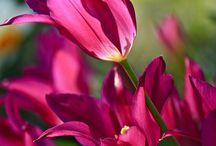 T thru U Alphabetical Flowers / by Amanda Kupiec