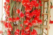 flores raras