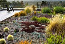 xeriscape / by Madeline Read