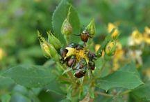 Garden insect/pest info / by Michelle Branham