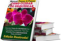 Orquideas como plantar