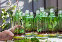 Bottle plant / Bottle Plant ☞ Monsieur Plant x G'Vine Gin Plant. Angélique - Coriandre - Cardamome #ThinkNature