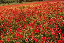 Photography: flowers and fields