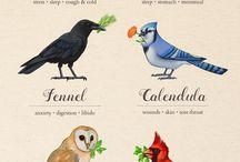 malu ptak