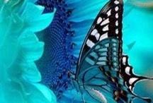 La belleza en azul y negro
