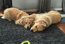 Puppies and Dogs / What dog should we get?