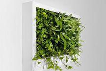 vertical gardening / by Lindiwe Coyne
