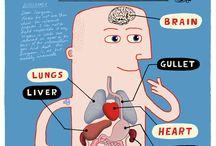 FUN medical illustration