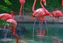 I ❤ flamingos
