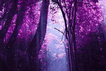 Colors **Beautiful Violet**