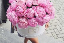 Flowers | Peonies / Just some random beautiful floral images of peonies, my favourite flowers.  I absolutely love stylised floral shots.  Here is some inspiration for instagram, or beautiful floral photography.  Perfect for wedding bouquets, and wedding decor.