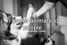 Animals! / by Cerina Vigil
