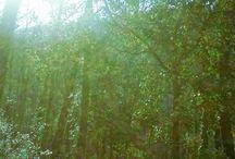 Alchemical Crossway / http://alchemicalcrossway.blogspot.it/