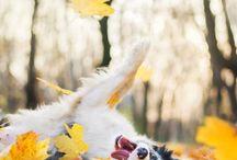 Dog's❤