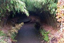 The Alnwick Garden / Trip to The Alnwick Garden, Alnwick Castle, Northumberland.