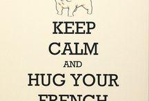 Bulldog Francês <3