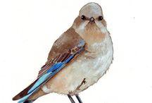 Akvarel fugle