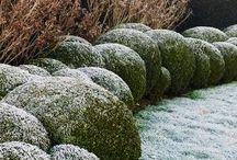 garden in winter / Winter in garden