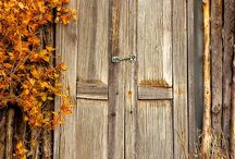 Autumn Beauty / by Cindy Miller
