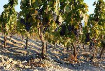 Feudo Maccari / Dalla passione per Sicilia, cuore del Mediterraneo, nascono vini eccellenti di Feudo Maccari