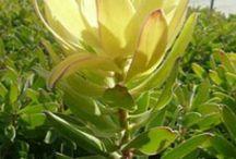 Flower &Foliage name
