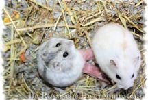 Hamstertjes