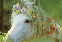 Robert Vavra Horse Photography Masterpieces / by Brooke Smith