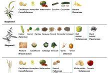 Health | OAS / Oral Allergy Syndrome