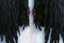 lit: angelfall