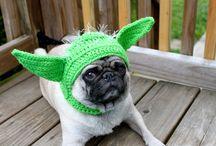 doggy hats