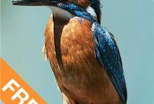 Natur-App / Die Natur-Apps zu unseren Büchern, u.a. Flora Helvetica App.