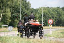 trouwkoetsen / wil je op een leuk en goedkope manier naar het stadhuis worden gereden???? neem contact op met trouwkoetsen.nl